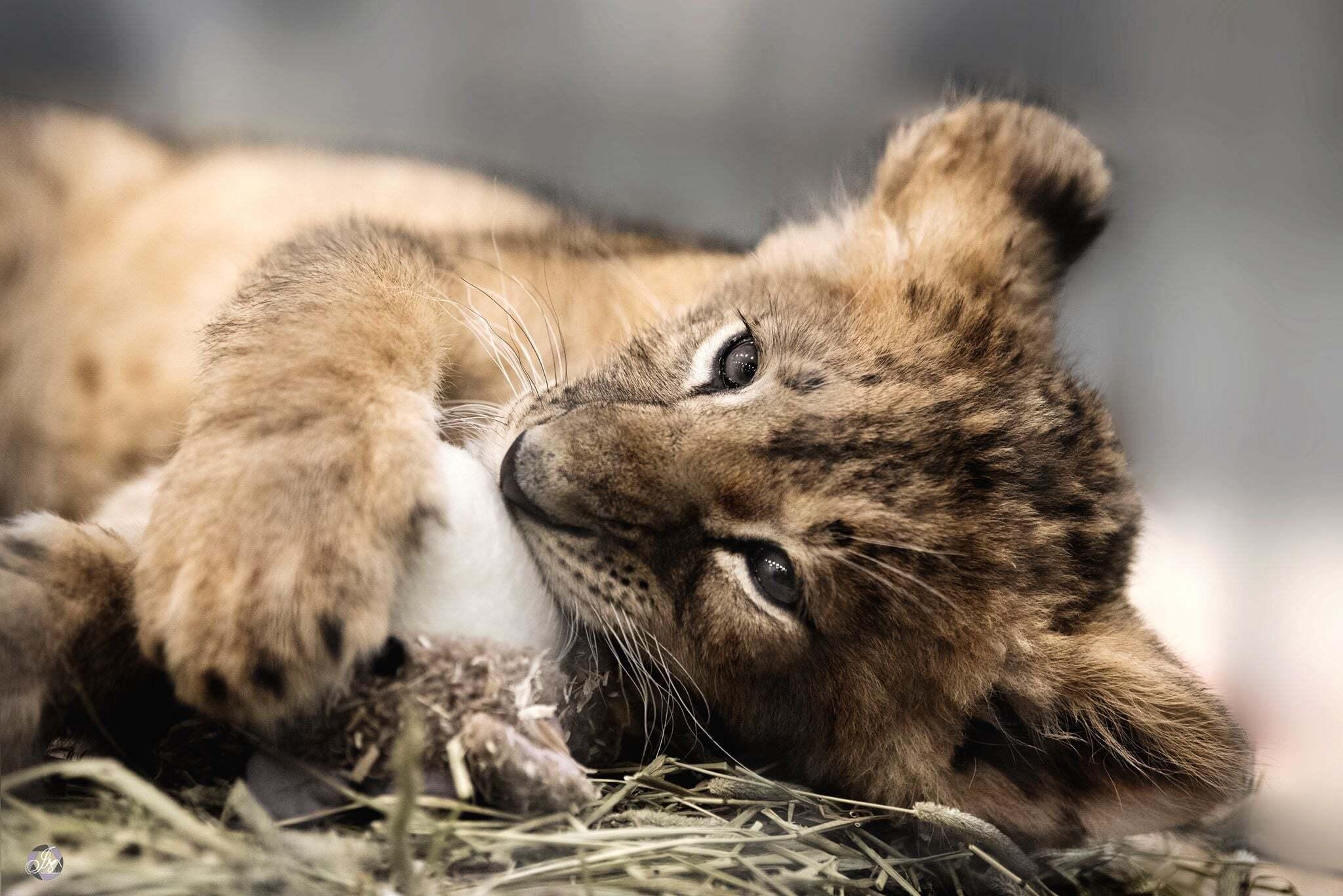 Activité à faire au Saguenay : Zoo de falardeau
